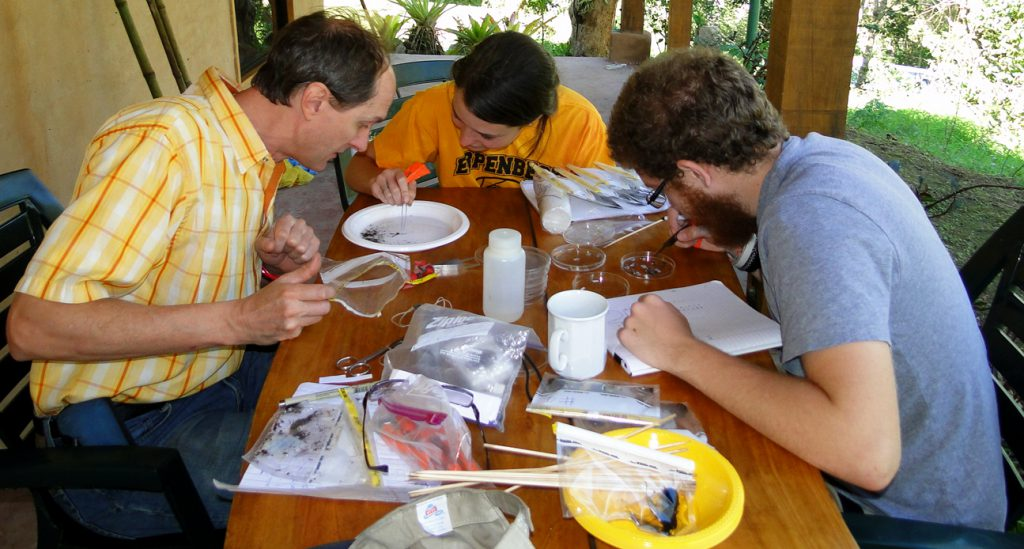 Study_Abroad_Program_Costa_Rica_Insects