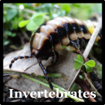 Invertebrates Species List Costa Rica