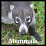 Mammals Species List Costa Rica